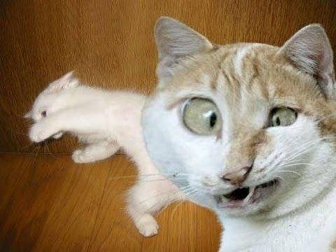 ТОП смешные коты и другие животные 2017