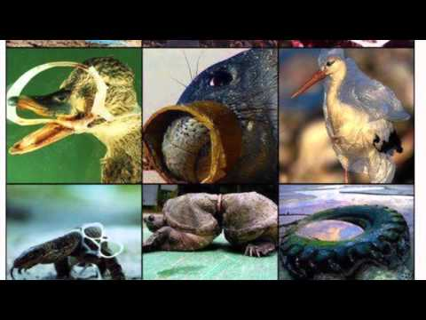 Ocean Pollution