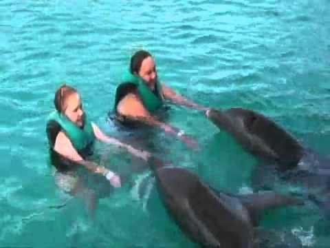 Nager avec les dauphins r publique dominicaine youtube for Nager avec les dauphins nice