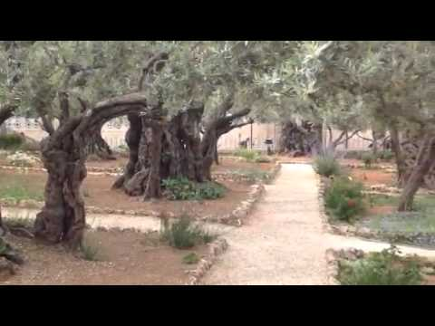 Garden Of Gethsemane (Where Jesus Was Betrayed By Judas)