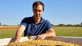 Une culture innovante de soja bio en Belgique