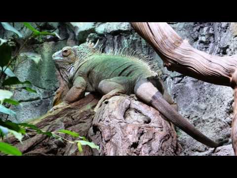 Gradina Zoologica din Berlin-Zoo Berlin- Zoologische Garten Berlin