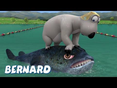 Bernard Bear | Triathlon AND MORE | Cartoons for Children