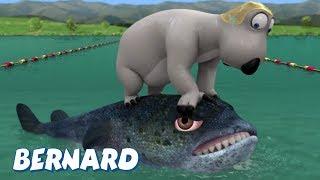 Bernard Bear   Triathlon AND MORE   Cartoons for Children