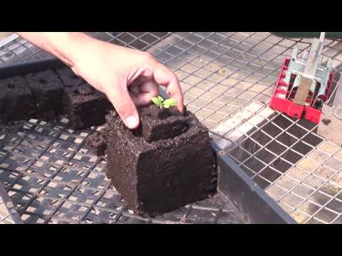 Making soil blocks using the soil cube tool seed for Soil block maker