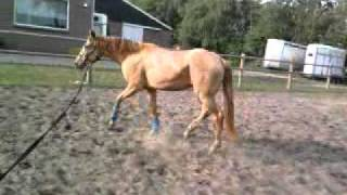 Copper lunging for the first time