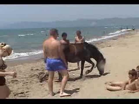 Horses in Albania Durres, vlore kali ne det