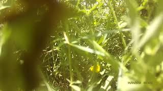 EMAX motors spinning 2 min in grass! No burned motors :-)