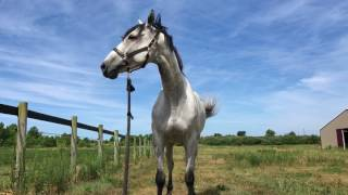 meet my horses