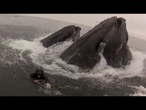 Diver: I thought the other diver was inside the whale