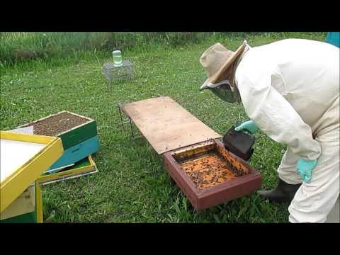 Борьба с пчелами своими руками