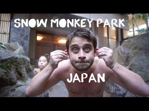 mozu the snow monkey the japanese