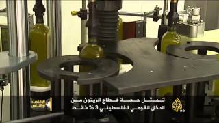 الاقتصاد والناس- موسم حصاد الزيتون في فلسطين