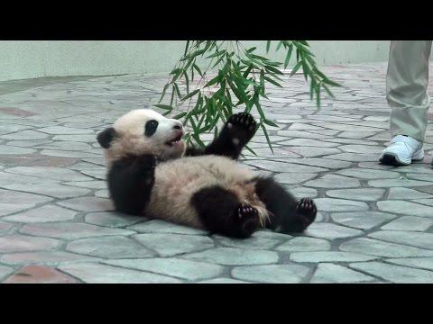 結浜 panda パンダ アドベンチャーワールド