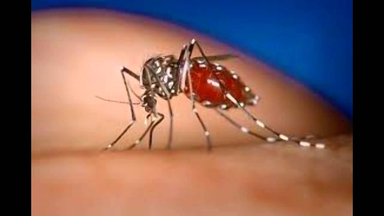 chikungunya fever a review of the literature Chikungunya, dengue, malaria: causes, symptoms and possible methods of treatment here's what you need to know about the differences in the symptoms of chikungunya.