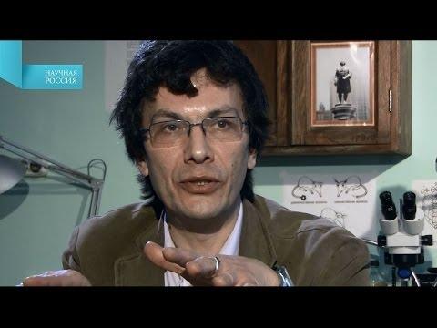 Марков Александр - Теория полового отбора