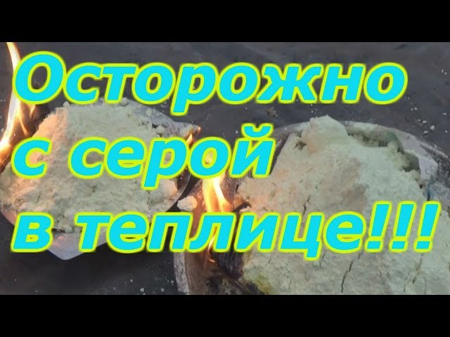 ОБРАБОТКА ТЕПЛИЦЫ СЕРОЙ - БУДЬТЕ ОСТОРОЖНЫ!