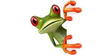 Noosa's famous tree frog visits Noosa432.com.au !