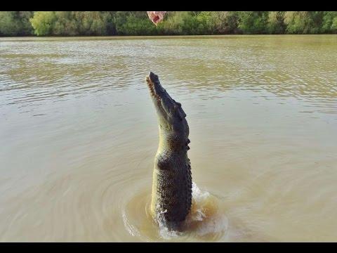 документальные фильмы о рыбалке в австралии