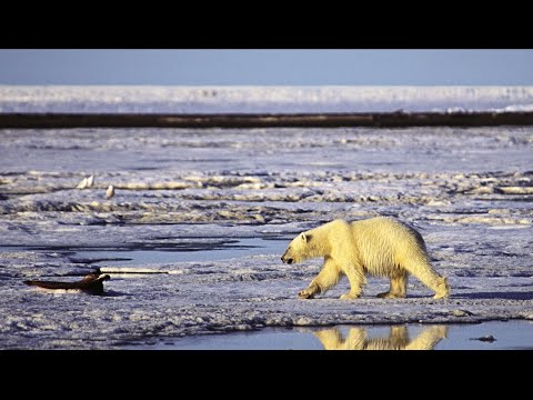 """""""Irresponsible & Reckless"""": Environmentalists Decry Obama's Approval for Shell Drilling in Arctic"""