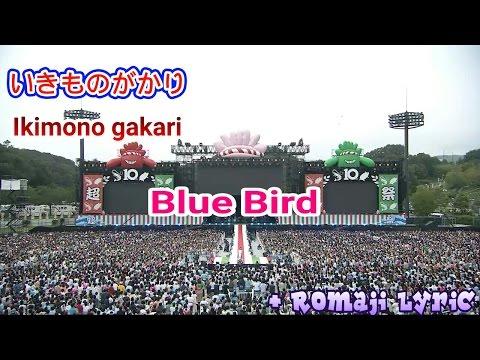 Ikimono gakari - Blue Bird + Romaji Lyric [Atsugi Show]