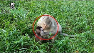wow Why mother bite and hit newborn monkey, newborn baby scare and cry loudly