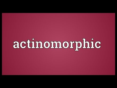 Header of actinomorphic