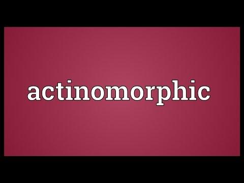Header of actinomorphic