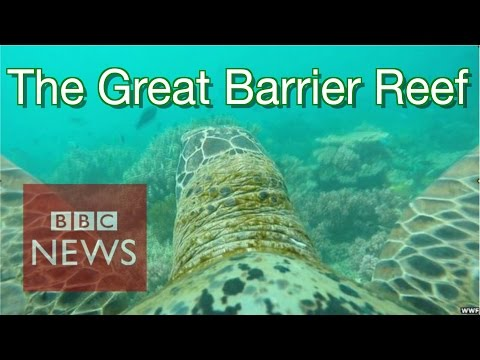 Amazing turtle-cam views of Great Barrier Reef - BBC News