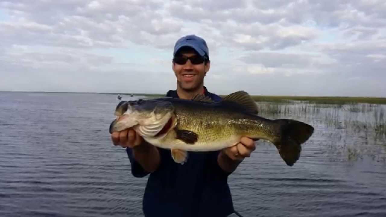 June 2014 lake okeechobee fishing report by okeechobee for Bass fishing guide
