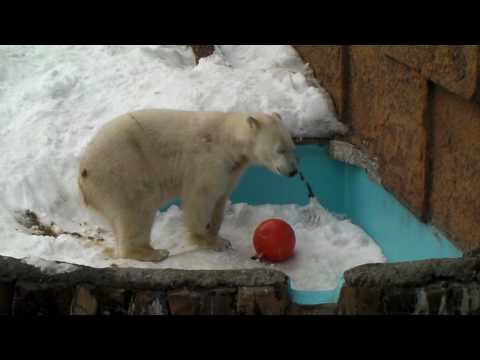 Polar Bear 20100224 ピリカ 浮きボールが取れない