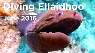 Diving Ellaidhoo Maldives by Cinnamon