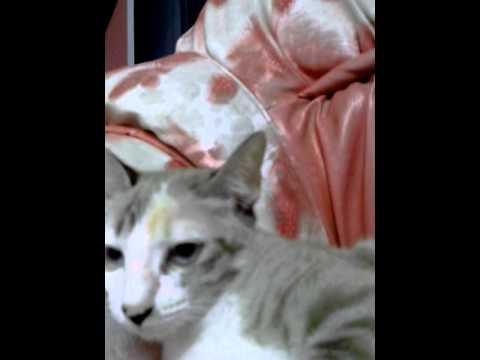 รวมพลแก๊งแมว ฉบับ  ล้อเลียน