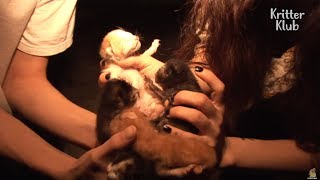 The Twisted Fate Of Six Kittens  | Animal in Crisis EP8
