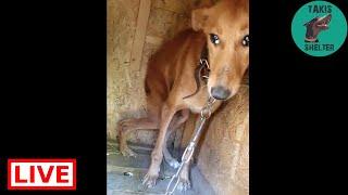 A scared prisoner girl - Takis Shelter