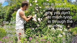 Gworld 003 - tying in a climbing rose.  Part 1/3 - prep.