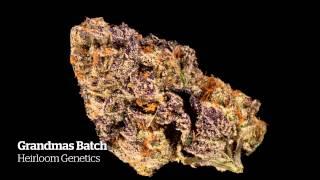 2014 HIGH TIMES Seattle US Cannabis Cup Entries Part II