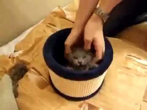 Кошка борется с потоком воздуха   Cat fights with the air flow Юмор! Прикол! Смех