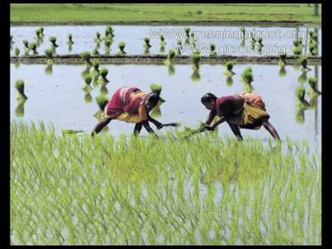 Green India 2 English video