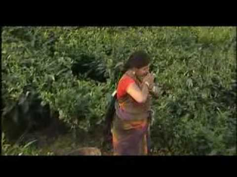 Pahariya Moon xvid.avi video