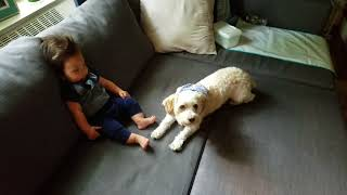 Dog and baby trick