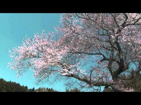 恵那市 「阿弥陀堂」 ~桜~