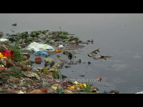 Pollution blights the Yamuna river in Delhi
