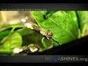 Audubon Insectarium | NoLaShines.org