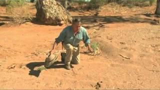 Wildlife Man catches most venomous land snake in the world