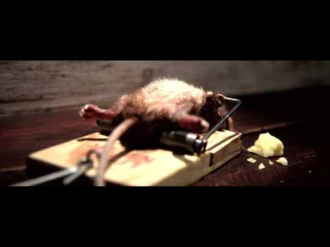 ¿Cómo eliminar ratones?