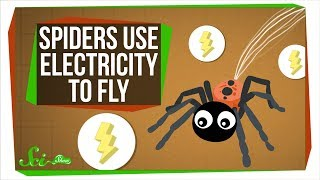 Turns Out, Spiders Use Electricity to Fly