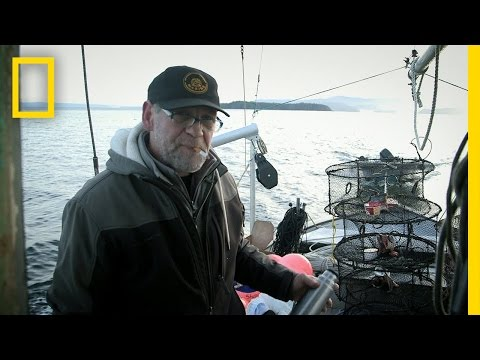 Packing the Shrimp Pots | Port Protection