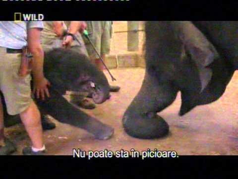 newborn (elephant)
