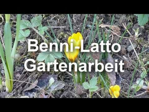 Benni-Latto Gartenarbeit